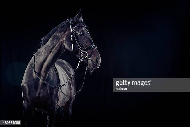 Horse on Black Background