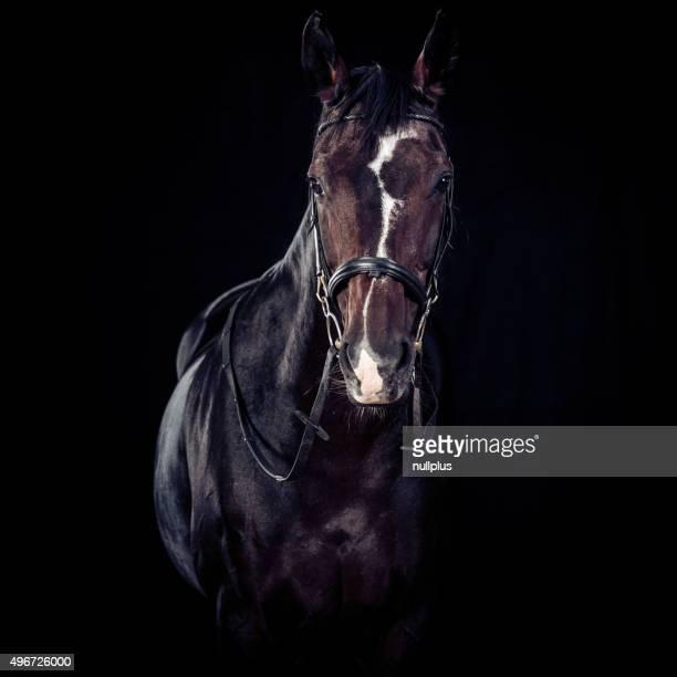 Pferd auf schwarzem Hintergrund