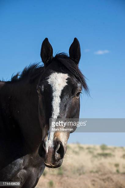 Horse on open range