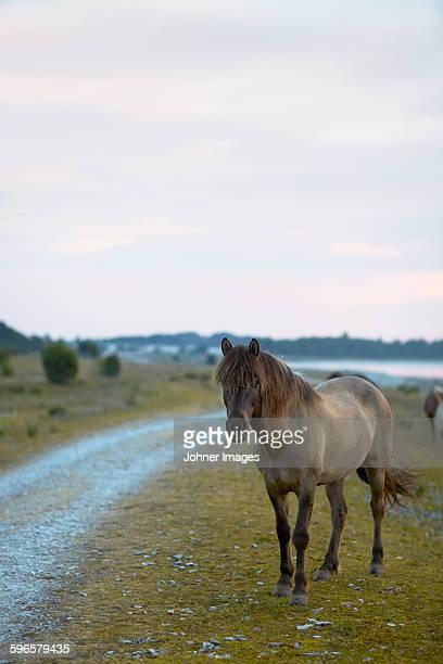Horse on pasture