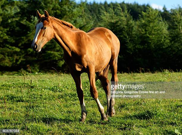 horse on pasture - gregoria gregoriou crowe fine art and creative photography. stock photos and pictures