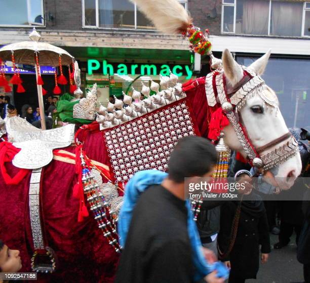 Horse on Shia Muslim parade in Manchester, UK