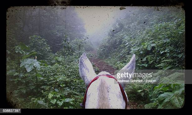 Horse On Trail Amidst Trees In Forest