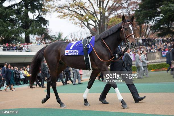 Horse One And Only being led around the paddock during the Japan Cup at Tokyo Racecourse on May 29 2016 in Tokyo Japan