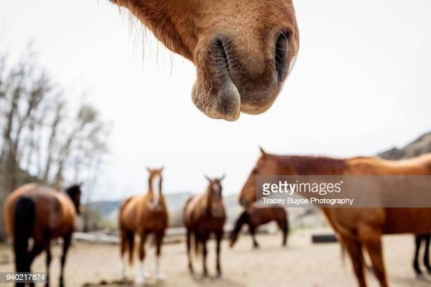 Horse Parts