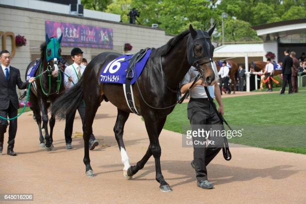 Horse Phantom Light being led around the paddock during the Race 11 Tenno Sho Spring at Kyoto Racecourse on May 1 2016 in Kyoto Japan