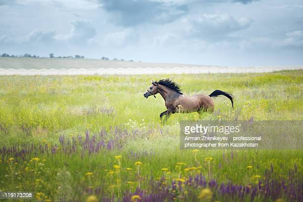 horse - 一匹 ストックフォトと画像