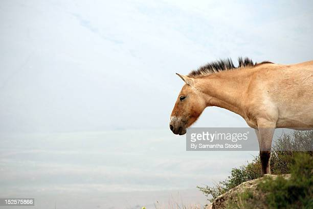 horse - samantha stocks stock pictures, royalty-free photos & images