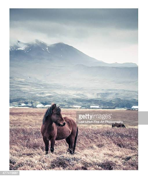 horse - lise ulrich stock pictures, royalty-free photos & images