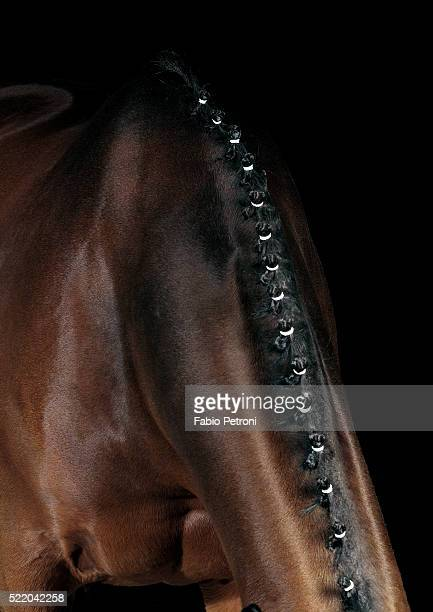 horse - 馬場馬術 ストックフォトと画像