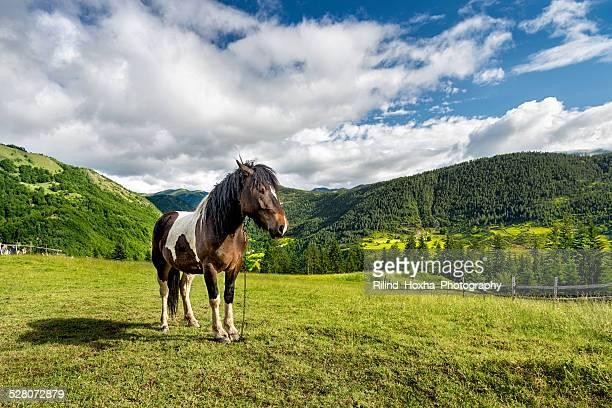 horse - albanië stockfoto's en -beelden