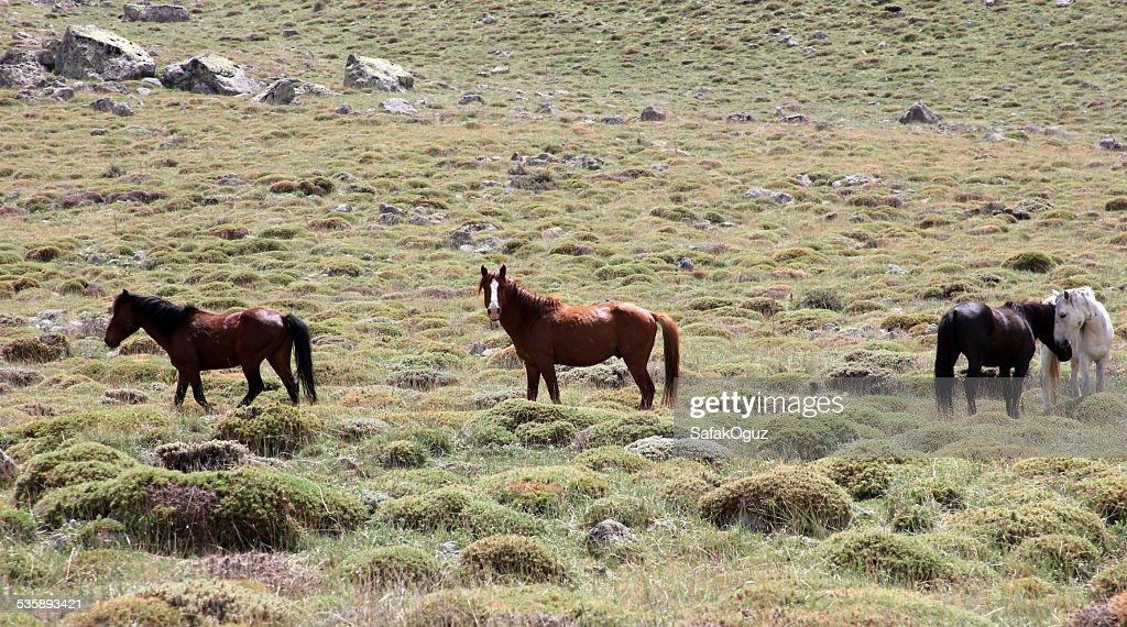 Horse : Stockfoto