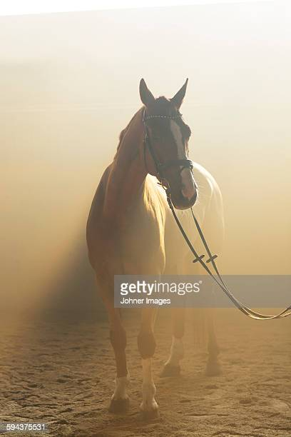 horse - atmospheric mood stock pictures, royalty-free photos & images