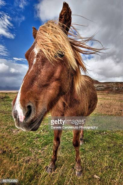 horse - daniele carotenuto stock-fotos und bilder
