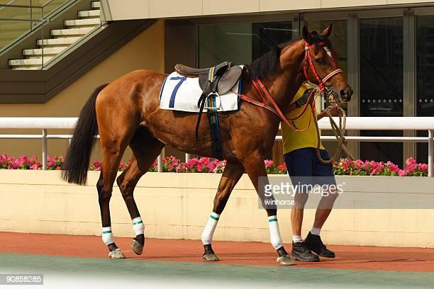 horse - racehorse stock-fotos und bilder