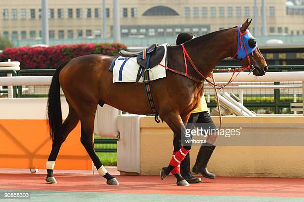 horse - racehorse stock pictures, royalty-free photos & images