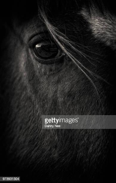 horse - cow eyes stock pictures, royalty-free photos & images