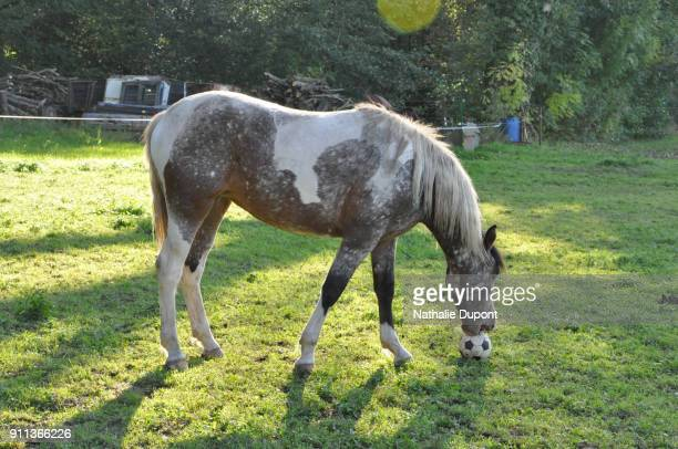 Horse playing ball in a pasture