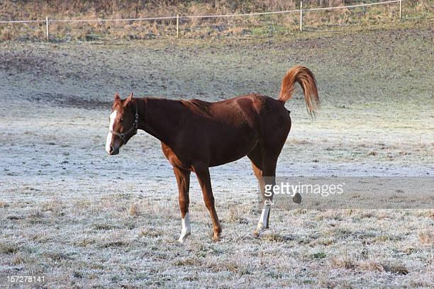 cavallo porta per - cacca foto e immagini stock