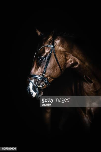 horse portrai - racehorse stock pictures, royalty-free photos & images
