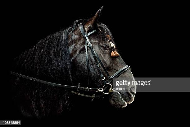horse portrait - shire horse stock pictures, royalty-free photos & images
