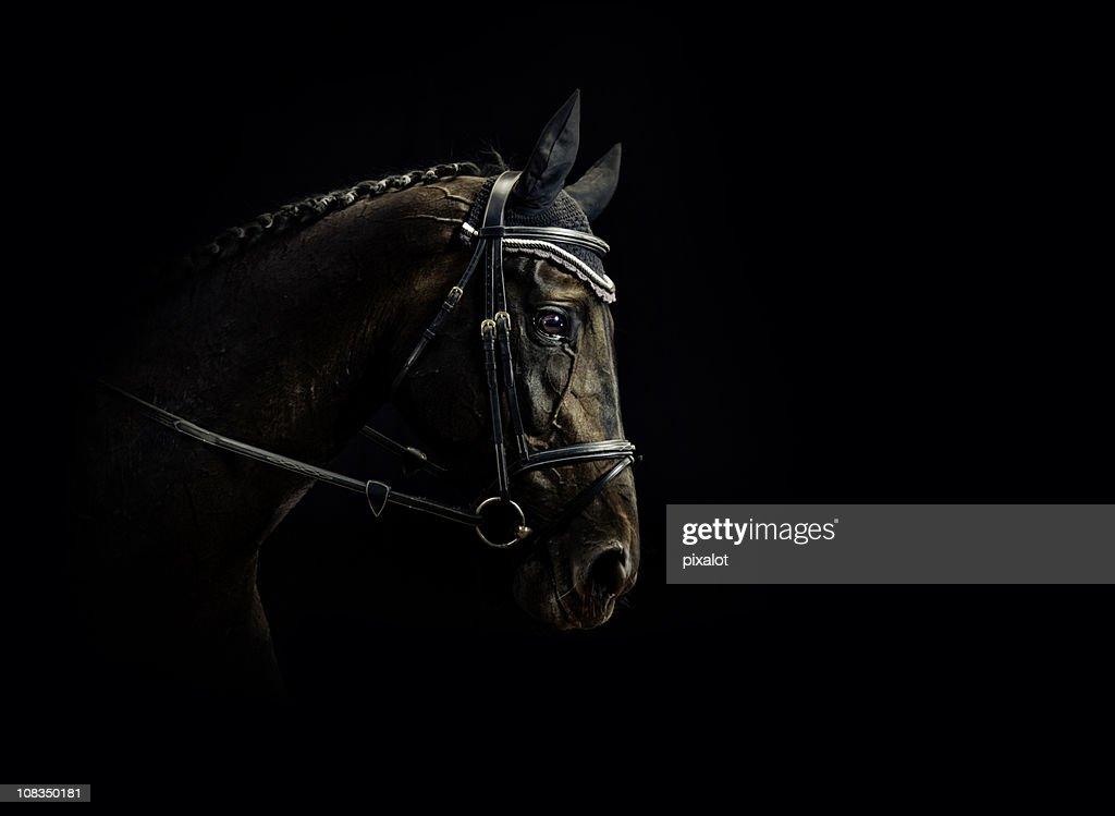Horse Portrait : Stock Photo