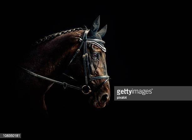 horse portrait - horse stock pictures, royalty-free photos & images