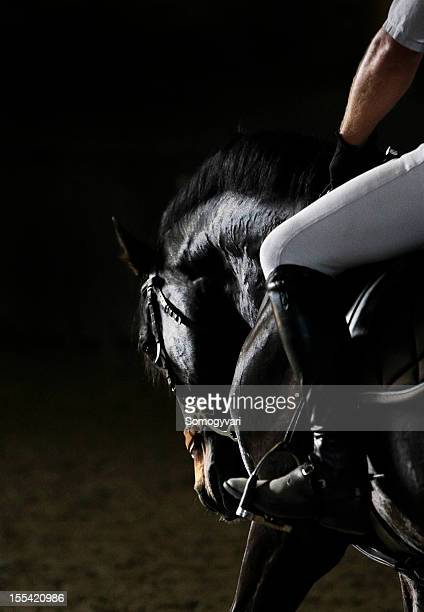 horse portrait - equestrian event stock pictures, royalty-free photos & images
