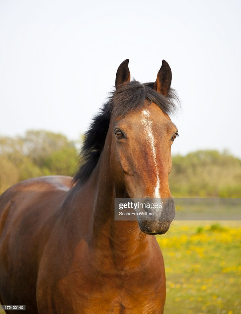 horse portrait : Stock Photo