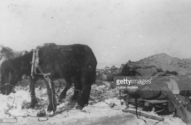 A horse pulls a sleigh piled high with corpses during a plague epidemic in Manchuria