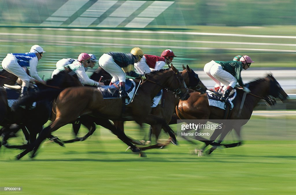 Horse race onturf, side view : Stock-Foto