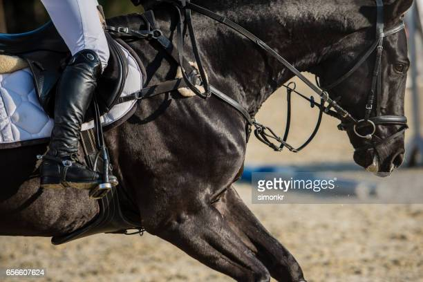 horse race - riding boot stock pictures, royalty-free photos & images