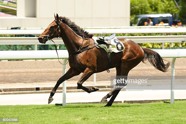 horse racing accident - racehorse stock pictures, royalty-free photos & images