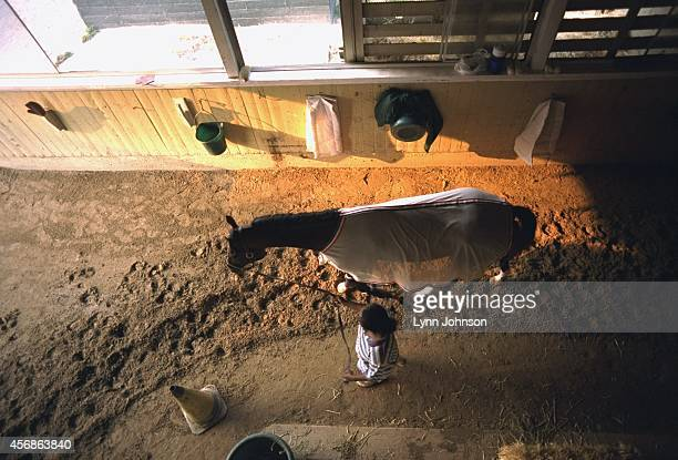 Aerial view of Cigar in stall during photo shoot at stables of Belmont Park Elmont NY CREDIT Lynn Johnson