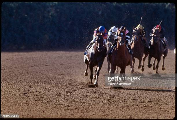 Belmont Stakes Jockey Steve Cauthen in action aboard Affirmed vs Jorge Velasquez aboard Alydar at Belmont Park Affirmed wins Triple Crown Elmont NY...