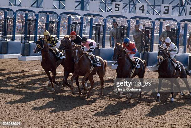 Belmont Stakes Jockey Steve Cauthen in action aboard Affirmed vs Jorge Velasquez aboard Alydar out of starting gates at Belmont Park Affirmed wins...
