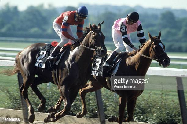 Belmont Stakes Jockey Steve Cauthen riding Affirmed in action vs Jorge Velasquez riding Alydar at Belmont Park Triple Crown winner Elmont NY CREDIT...