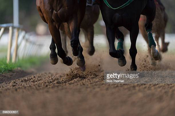 horse racing detail, hooves on all weather track - horse racing stock pictures, royalty-free photos & images