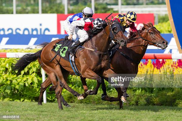 horse racing in singapore - horse racing stock pictures, royalty-free photos & images