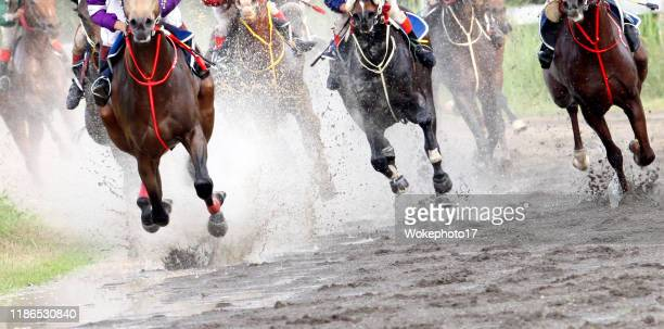 horse racing - horse racing stock pictures, royalty-free photos & images