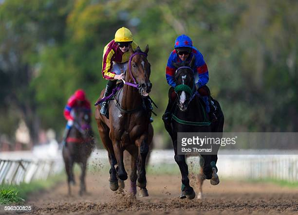 horse racing - racehorse stock pictures, royalty-free photos & images