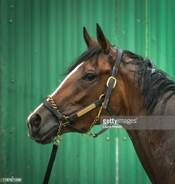 horse racing portraits - rein stock pictures, royalty-free photos & images