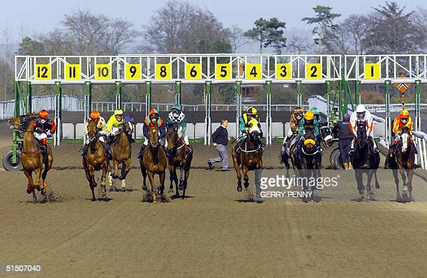 Horse racing returns with the first race at Lingfield Park racecourse 07 March 2001 for the resumption of racing in the UK after a 7 day postponement...