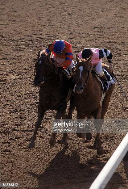Horse Racing The Belmont Stakes Steve Cauthen in action winning race aboard Affirmed vs Jorge Velasquez in action aboard Alydar at Belmont Park...