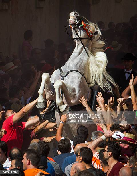 TOPSHOT A horse rears in the crowd during the traditional San Juan festival in the town of Ciutadella on the Balearic Island of Menorca on the eve of...