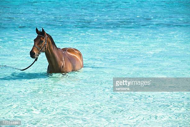 Horse refreshing into crystal clear lagoon