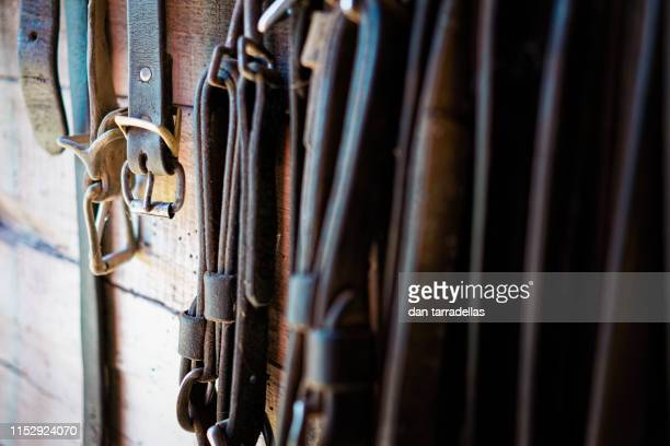 horse reins and buckles - 手綱 ストックフォトと画像