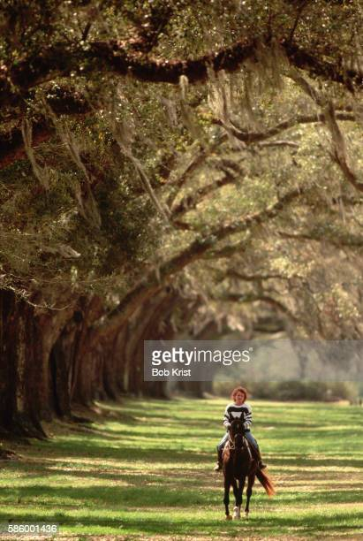 horse rider under old oaks of boone hall plantation - boone hall plantation stock pictures, royalty-free photos & images