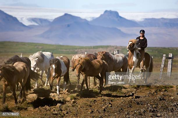 Horse riding in southern Iceland by the Gullfoss waterfall | Location Hvita Canyon Iceland