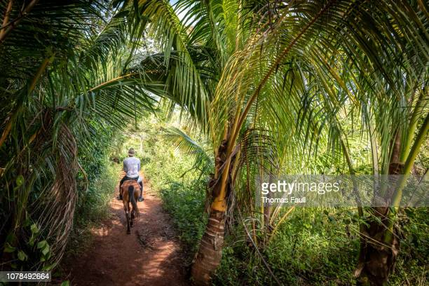 horse riding in the lush forests of vinales in cuba - cuba foto e immagini stock